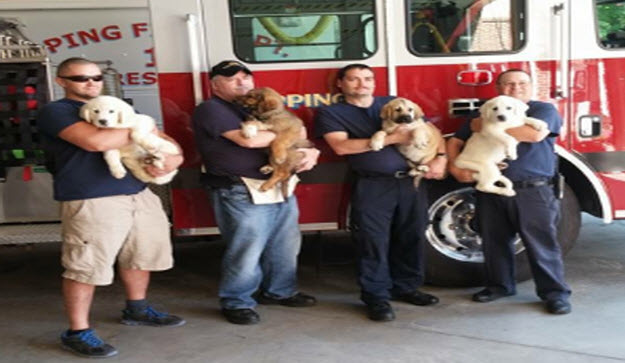 'Hero Pups' Gives Back to Veterans, First Responders