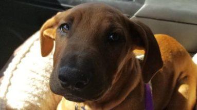 Dispatcher Names Emotional Support Dog 'Sully' - after Sacramento officer Sullivan