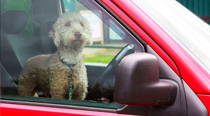 New Law Protects Firefighters and EMTs When Saving Pets from Locked Cars